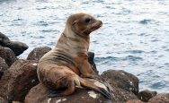 5 day Galápagos Island Tour Best off